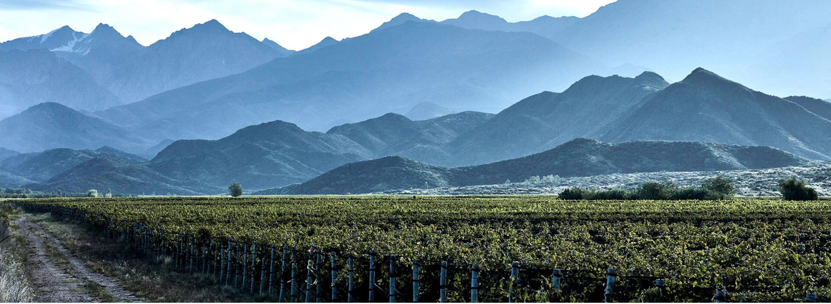 Around the World with Corney & Barrow: Wines of the Americas
