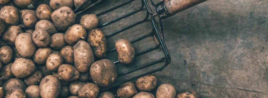 German Sausage and Potato Salad